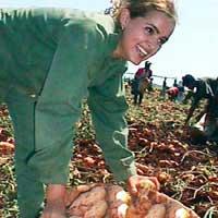 Feria de la patata 2004